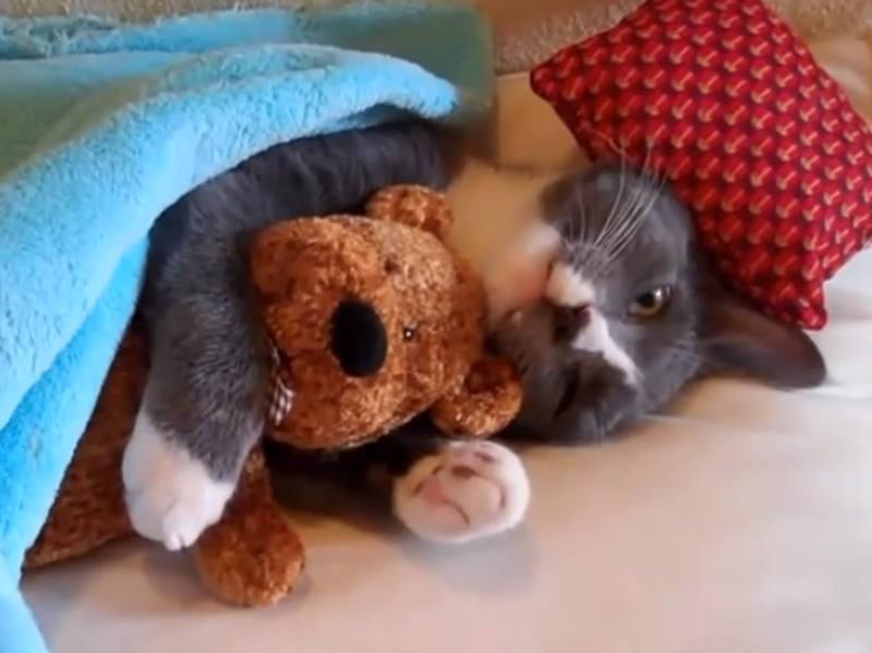 Vid o de petits chats dr les et trop mignons toute l - Jeux d animaux trop mignon ...