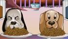 gratuit : Concours de chien