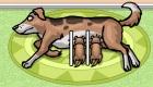 gratuit : Des chiots à soigner