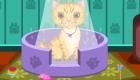 gratuit : Adopter un chaton