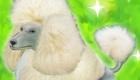 gratuit : Jeu de chien virtuel