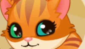 gratuit : S'occuper d'un chaton