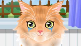 gratuit : Toilette de chaton