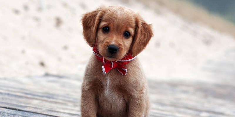 les photos de chiens les plus mignons du net toute l actu fun jeux 2 filles. Black Bedroom Furniture Sets. Home Design Ideas