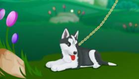 habillage : Habillage de promeneuse de chiens