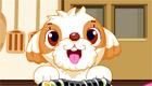 cuisine : Des sushis pour chien