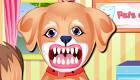Un chiot chez le dentiste