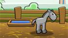 Elever un cheval