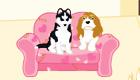 Une pension pour chiens
