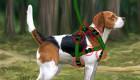 Jeu de Lassie, chien fidèle