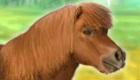 Dresser un cheval