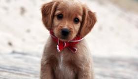 Les photos de chiens les plus mignons du net