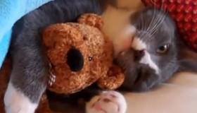 Vidéo de petits chats drôles et trop mignons!