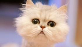 Les vidéos les plus drôles de chats