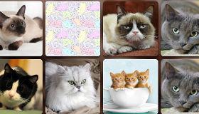Puzzle de chats